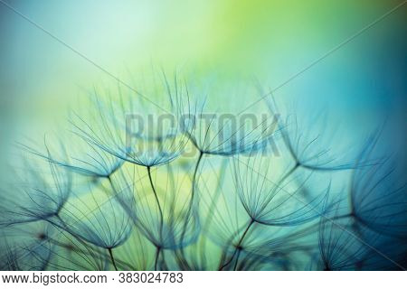 Abstract Natural Background. Beautiful Fluffy Dandelion Flowers. Floral Spring Blue and Green Backdrop.