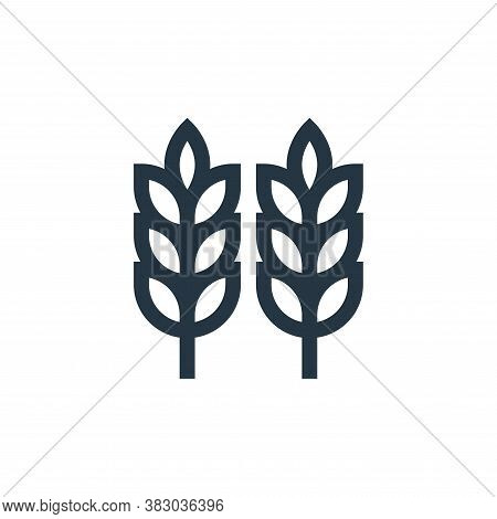 wheat icon isolated on white background from morocco collection. wheat icon trendy and modern wheat