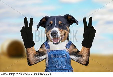 Hello Goodbye High Five Dog In Jeans Dungarees