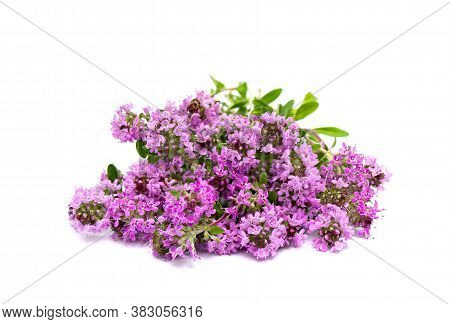 Blooming Thymus Vulgaris ( Common Thyme, German Thyme, Garden Thyme Or Just Thyme ) On White Backgro
