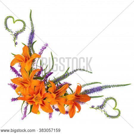 Flowers Hemerocallis Fulva (orange Day-lily, Tawny Daylily, Tiger Daylily, Fulvous Daylily, Ditch Li