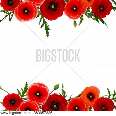 Red Poppies, Common Poppy, Corn Poppy, Corn Rose, Field Poppy, Flanders Poppy, Red Weed, Coquelicot