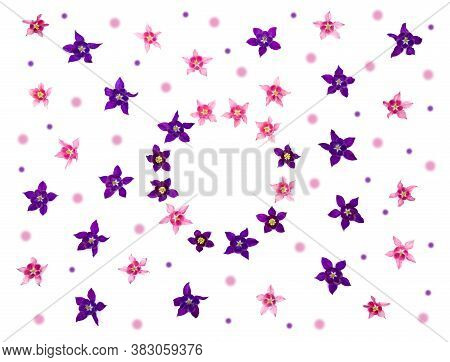 Pink And Violet Flowers Aquilegia (granny\'s Bonnet, Columbine) On A White Background With Space For