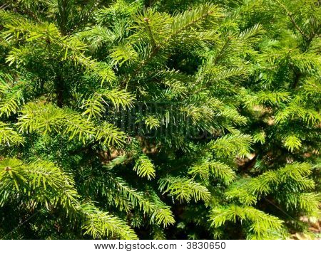 Greenbackground_Filtered