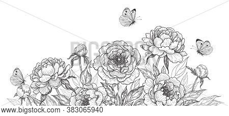 Horizontal Backgrounds With Blooming Peonies And Butterflies. Black And White Flowers And Flying Mot