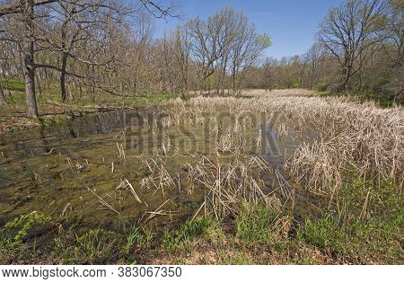 Grassy Wetland In The Forest In Moraine Hills Stae Park In Illinois