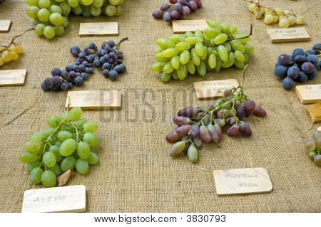 Collection Different Kinds Grapes