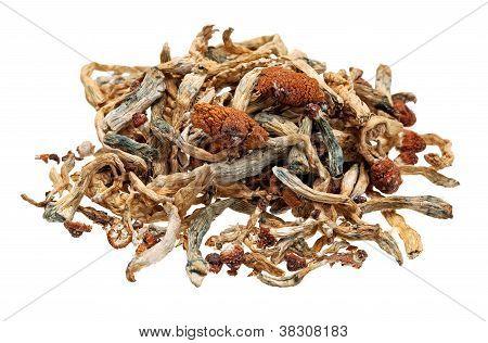 Pile Of Magic Mushrooms