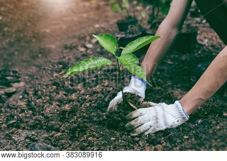 Planting A Tree. Close-up On Young Man Planting The Tree While Working In The Garden. Soil Planting