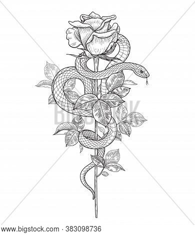 Hand Drawn Twisted Snake And Rose Bud On High Stem Isolated On White. Vector Monochrome Serpent And