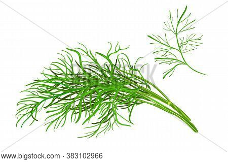 Dill Isolated On White Background. Fresh Bunch Dill Spice Plant. Green Dill Weed Twig For Menu, Pack