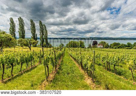 View Of Lake Constance From The Vineyards Near Pilgrimage Church Birnau. Uhldingen-mühlhofen, Baden-