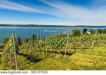 View Of Lake Constance From The Vineyards Near Pilgrimage Church Birnau. Baden-wuerttemberg, Germany