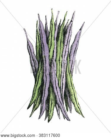 Hand-drawn Watercolor Image Of A Green Beans. Jpeg Only
