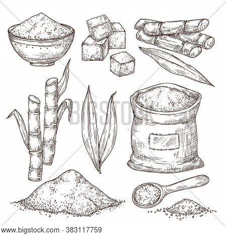 Sketch Sugar. Sweet Seasoning Bag, Isolated Sugarcane Stalk Leaves. Hand Drawn Manufacture, Engravin