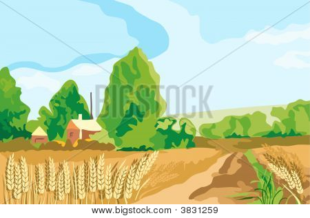 Wheat Land