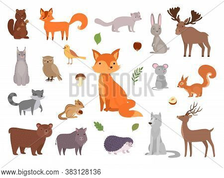 Cute Wild Animals. Vector Forest Animals Collection Fox Bear Owl Vector Pictures Set. Illustration F