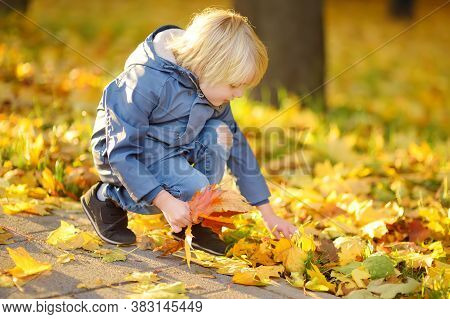 Little Boy Having Fun During Stroll In Park At Sunny Autumn Day. Child Collect Maple Leaves. Inquisi