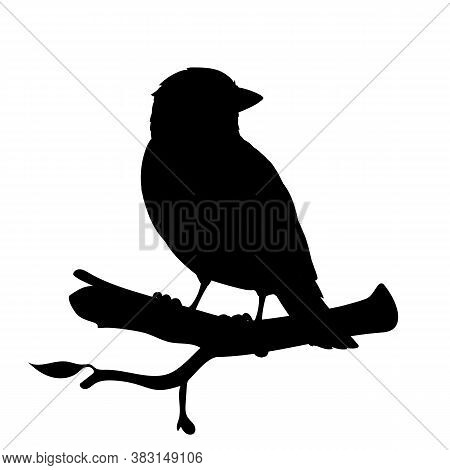 Realistic Sparrow Sitting On A Branch. Monochrome Vector Illustration Of Black Silhouette Of Little