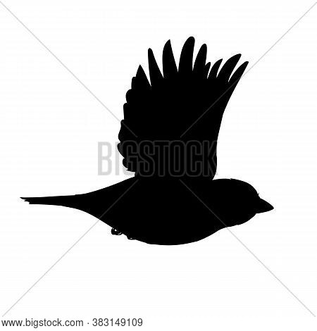 Realistic Sparrow Flying. Monochrome Vector Illustration Of Black Silhouette Of Little Bird Sparrow