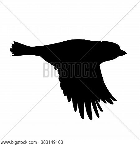 Realistic Sparrow Flying. Stencil. Monochrome Vector Illustration Of Black Silhouette Of Little Bird
