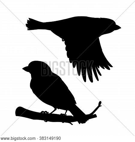 Realistic Sparrows Sitting And Flying. Stencil. Monochrome Vector Illustration Of Black Silhouettes