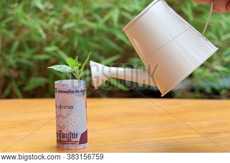Rolled Banknote Money Ten Thousand Cambodian Riel And Young Plant Grow Up With Small White Watering