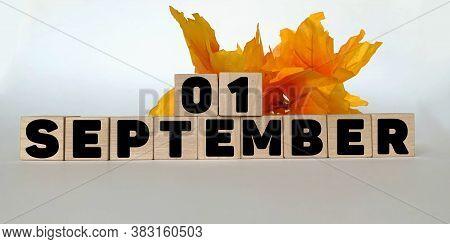 September 1.september 1 On Wooden Cubes On A White Background.autumn Leave .calendar For September.a