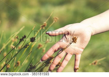 Woman Hand Running Through Meadow Field With Wildflowers. Girls Hand Touching Wildflowers Close Up.