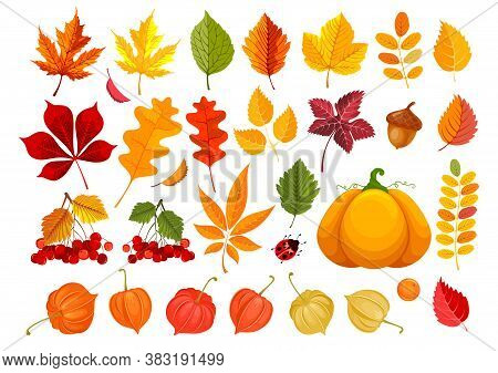 Big Set Of Fall Leaves And Autumn Objects. Clipart With Many Different Leaves, Pumpkin, Acorn, Physa