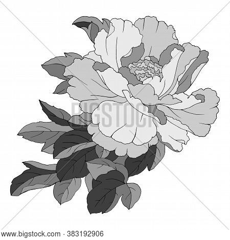 Drawing Of A Pion In Monochrome Colors, Vector Illustration, Isolate On A White Background