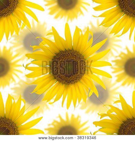 Seamless Background Made Of Beautiful Yellow Sunflowers