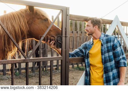 Rancher In Plaid Shirt Touching Head Of Brown Horse In Corral On Farm
