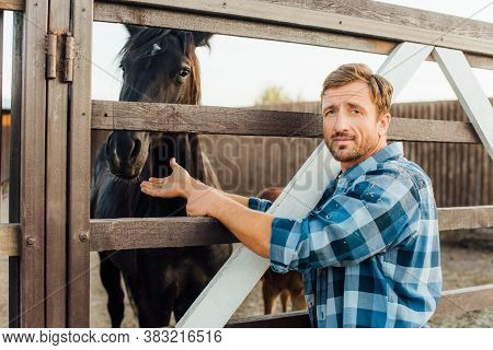 Rancher In Checkered Shirt Touching Brown Horse In Corral While Looking At Camera