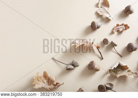 Fallen Oak Leaves, Acorns And Acorn Caps On A Beige Background. Autumn Monochrome Pattern With Copy
