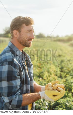 Rancher In Checkered Shirt And Gloves Holding Fresh Potatoes In Cupped Hands While Looking Away