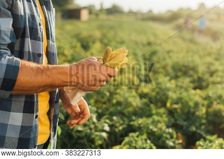 Cropped View Of Rancher Holding Gloves While Standing On Plantation