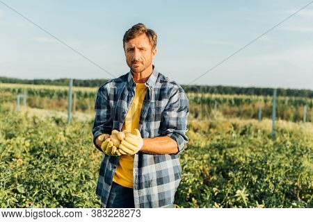 Rancher In Plaid Shirt Looking At Camera While Holding Fresh, Organic Potatoes In Cupped Hands