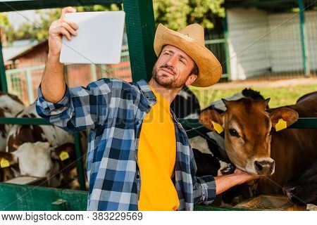 Rancher In Straw Hat And Checkered Shirt Taking Selfie With Calf On Digital Tablet
