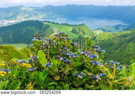 Wild flowers in the mountain in the lake of Sete Cidades, a volcanic crater lake on Sao Miguel island, Azores, Portugal. View from Boca do Inferno