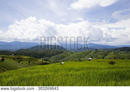 Rice Planting On The Mountain, Rice Terraces At Ban Pa Pong Piengin Thailand