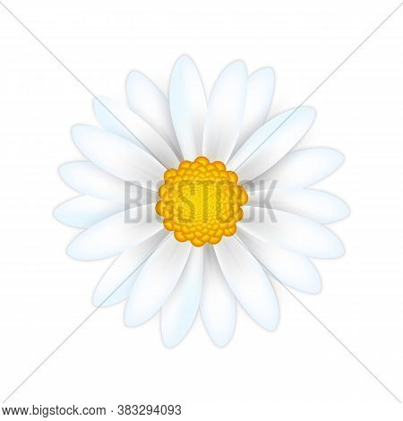 White Daisy Chamomile Isolated On White Background. Realistic 3d Flower Top View. Vector Illustratio