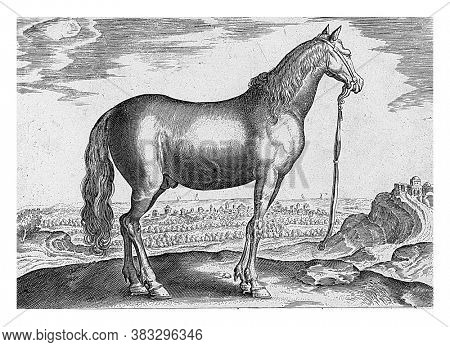 Horse from Thessaly, anonymous, after Hieronymus Wierix, after Jan van der Straet, 1624 - before 1648 A Thessalian horse in a landscape, vintage engraving.