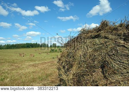 Rural Landscape With Summer Field With Many Rolled Haystacks With Part Of One Of It Close-up On Fron