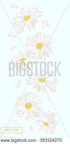 Delicate Flower Chamomile. Blooming White Chamomile, Design For Cosmetic Product, Tea, Perfume, Esse