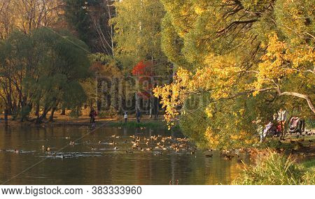 People Walk In The Autumn Park On A Warm Sunny Day. Lake In The Park. Beautiful Trees Bent Over The