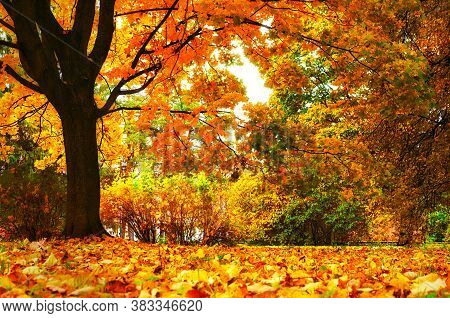 Autumn landscape. Autumn city park, yellow foliage on the foreground. Diffusion filter applied. Colourful autumn park in cloudy autumn weather. Autumn park landscape