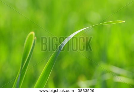 Soft Green Grass