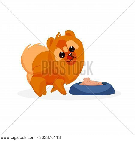 Chow Chow Puppy. Isolated Playful Purebred Chow Chow Dog Puppy Icon. Cute Doggy Pet Animal Cartoon C
