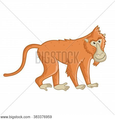 Baboon Monkey. Isolated Wild Brown Ape With Tail. Cute Primate Mammal Cartoon Character Icon. Vector